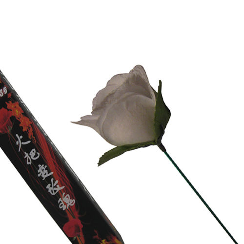 Torch To Rose(White)